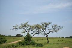 Två ensamma träd i härligt himmellandskap Arkivfoto