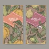 Två etiketter med citrus färg för filial för bergamiaaka bergamot- och Psidiumguajavaaka guava skissar på tappningbakgrund vektor illustrationer