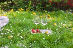 Två exponeringsglas av vin och jordgubbar Picknick i en röjning med blommor Vår i Nederländerna royaltyfri foto