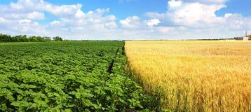 Två fält under himlen Royaltyfria Bilder