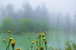 Två färg-, gräsplan- och gulingnatur royaltyfria bilder