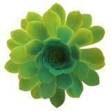 Två färgad isolerad blomma royaltyfria bilder