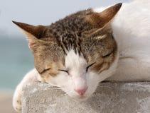 Två färgad katt som vilar på cementkvarteret, arkivbild