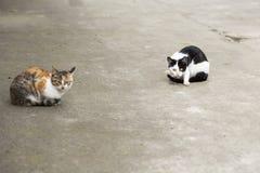 Två färgar katten Royaltyfri Bild