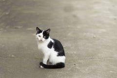 Två färgar katten Fotografering för Bildbyråer