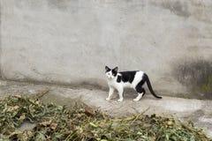 Två färgar katten Arkivfoton