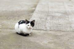 Två färgar katten Arkivbilder