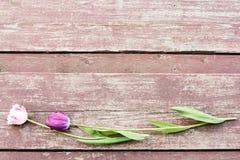Två färgrika tulpan lägger på wood moment Fotografering för Bildbyråer