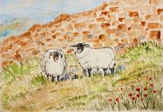 Två får, vattenfärgmålning, illustration. Arkivbild