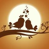 Två förälskade fåglar Arkivfoton
