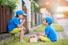 Två förtjusande lilla barn, pojkebröder som äter jordgubbar, Royaltyfria Bilder
