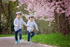 Två förtjusande pojkar i en körsbärsröd blomning arbeta i trädgården i våreftermiddag Arkivfoton