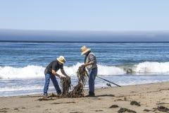 Två fiskare på en dagstrand reder ut linjer från havsväxt Arkivbild