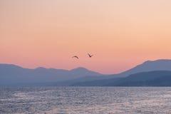 Två fiskmåsar över havet på solnedgången Fotografering för Bildbyråer