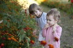 Två flickor smakar de bittra bären av bergaskaträdet royaltyfri foto