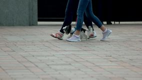 Två flickor som går med den lilla håriga hunden stock video