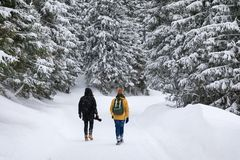 Två fotografer reser i skog royaltyfria foton