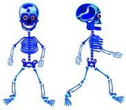 Två gå skelett Arkivbild