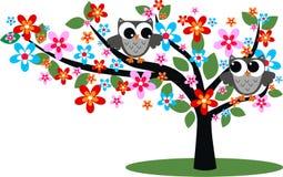 Två gråa owls Arkivbilder