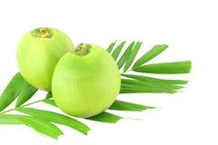 Två gröna kokosnötter och blad Arkivfoto