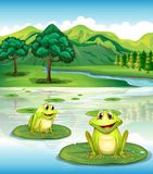 Två grodor ovanför waterliliesna stock illustrationer