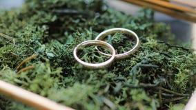 Två guldbröllopcirklar på mossa i exponeringsglasmetallask slut 4k upp zoomskott lager videofilmer