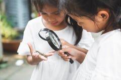 Två gulliga asiatiska barnflickor som använder förstoringsglaset som håller ögonen på och lär på gräshoppa som klibbar föreståend royaltyfri foto