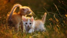 Två gulliga barn behandla som ett barn den röda kattungen på ett härligt ljus Royaltyfri Bild