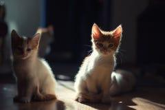 Två gulliga barn behandla som ett barn den röda kattungen på ett härligt ljus Royaltyfri Foto