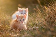 Två gulliga barn behandla som ett barn den röda kattungen på ett härligt ljus Royaltyfria Bilder