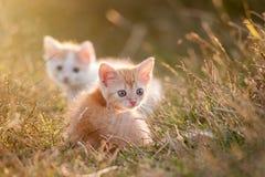 Två gulliga barn behandla som ett barn den röda kattungen på ett härligt ljus Fotografering för Bildbyråer