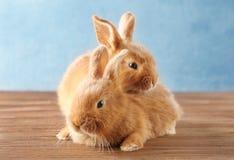 Två gulliga kaniner på golv royaltyfri foto