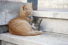 Två gulliga katter som ligger på trappa Royaltyfri Foto
