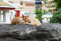 Två gulliga katter som tillsammans sover på enormt, vaggar Royaltyfri Foto