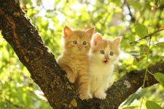 Två gulliga kattungar som sitter på trädfilialen Royaltyfri Bild