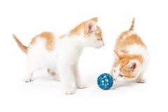 Två gulliga kattungar som spelar med leksaken Fotografering för Bildbyråer