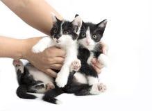 Två gulliga lilla katter i händerna av en flicka royaltyfria bilder