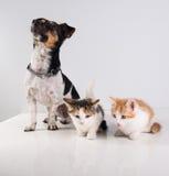 Två gulliga lilla kattungar och hund Royaltyfri Fotografi