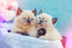 Två gulliga lilla kattungar som sitter i en korg royaltyfri fotografi