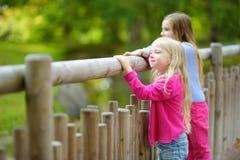 Två gulliga lilla systrar som håller ögonen på djur i zoo på varm och solig sommardag Barn som håller ögonen på zoodjur stå vid f Royaltyfria Bilder