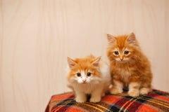 Två gulliga röda kattungar som sitter på en pläd Royaltyfria Bilder