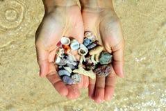 Två händer med olika snäckskal och stenar på havsstrandbakgrunden i den soliga sommaren rider ut Royaltyfri Bild