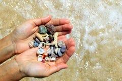 Två händer med olika snäckskal och stenar på havsstrandbakgrunden i den soliga sommaren rider ut Arkivbild