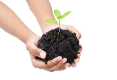 Två händer rymmer och att bry sig en ung grön växt/plantera trädet/, Royaltyfri Fotografi
