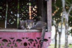Två härliga katter Royaltyfri Foto