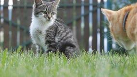 två härliga katter som spelar i trädgården royaltyfria bilder