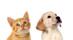 Två härliga valpar, en katt och en hund, Fotografering för Bildbyråer