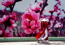 Två härliga vietnamesiska damtoalett i traditionell dräkt arkivbilder