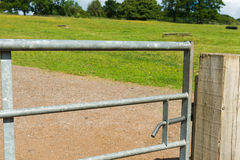 Två hästar Arkivbild