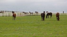 Två hästar arkivfilmer